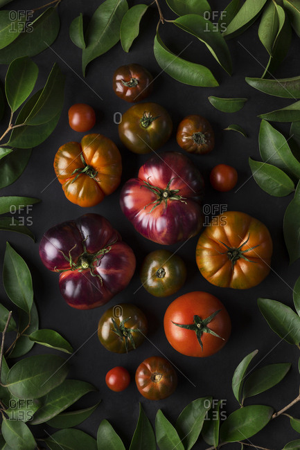 Top view of collected half-ripe green purple and red tomatoes on black background