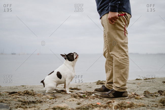 French Bulldog looking at unrecognizable male standing on sandy shore near calm sea
