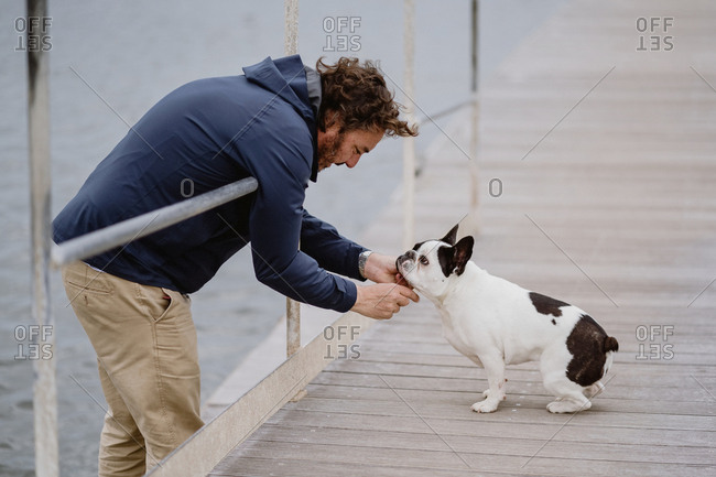 Side view of adult man in casual outfit petting adorable French Bulldog while spending time on lumber pier near sea