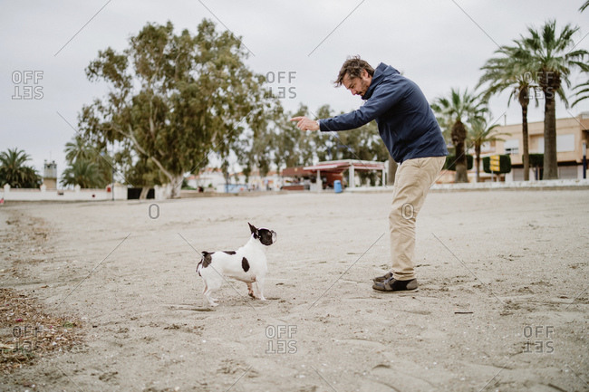 Side view of adult man with stick playing with obedient French Bulldog while spending time on sandy shore near sea
