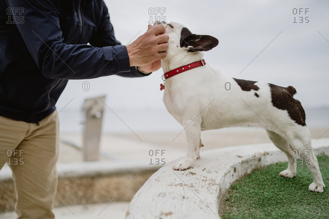 Side view of anonymous adult man in casual outfit petting adorable French Bulldog while spending time near sea
