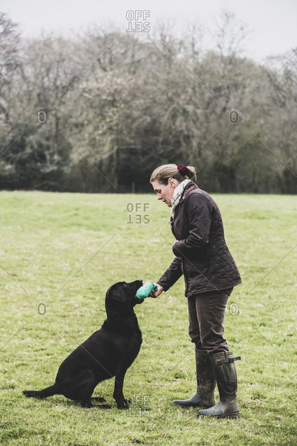 Woman standing outdoors in a field giving a green toy to Black Labrador dog.