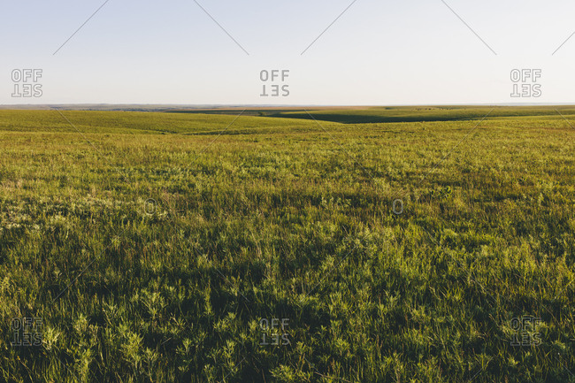 View across the wide open space of the Tallgrass Prairie Preserve in spring, with lush grass stretching to the horizon.