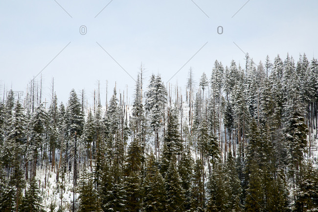 Mountain top in winter with fire damage