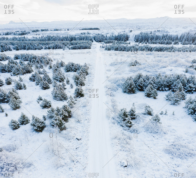 Road between trees and field in snow