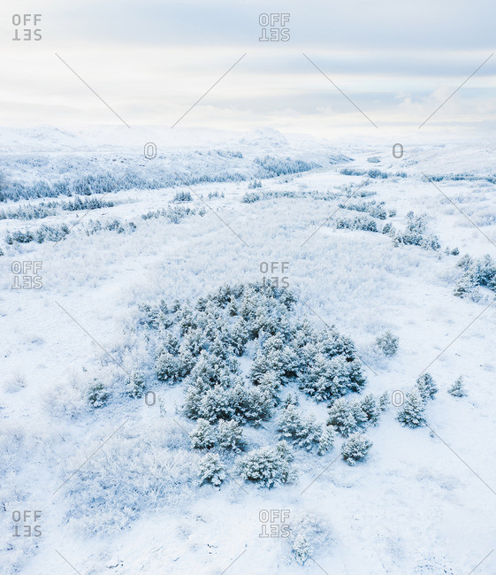 Trees and fields in snow