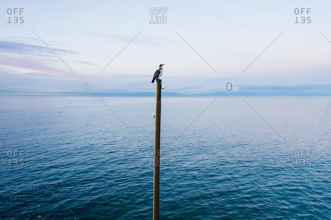 Bird sitting on post on coast near water