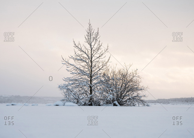 Trees between field in snow and amazing sky