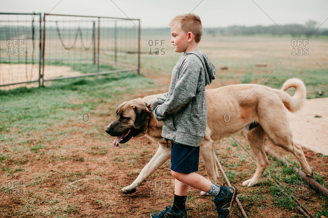 A boy walking with a large dog