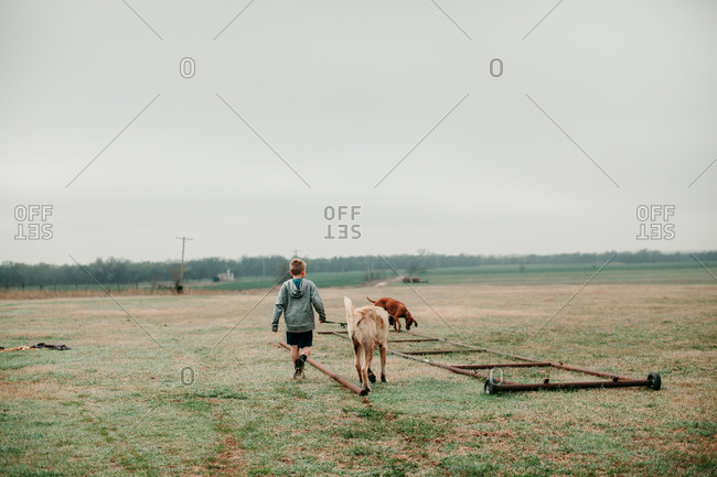 Boy walking with a large dog in the country