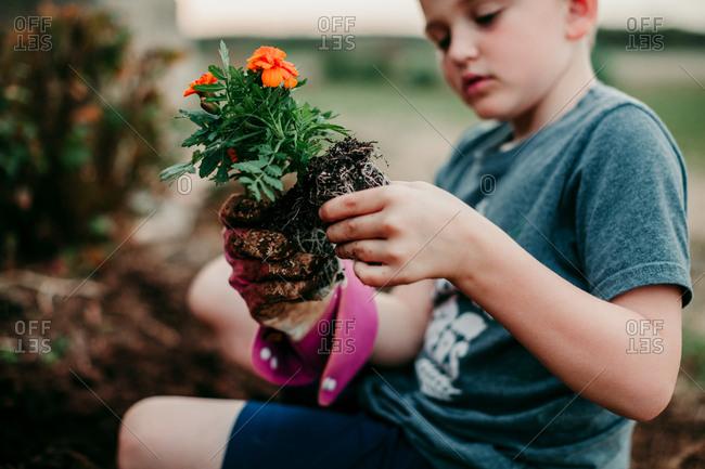A boy planting flowers
