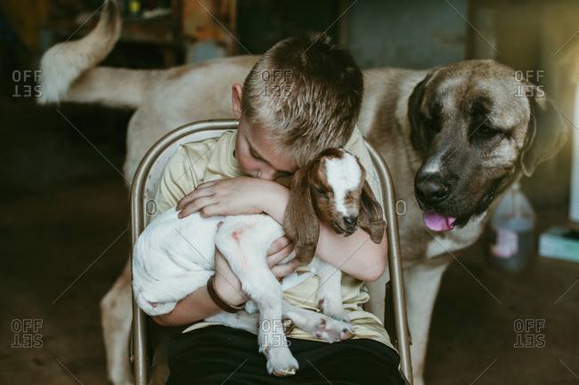 A boy holding a baby goat