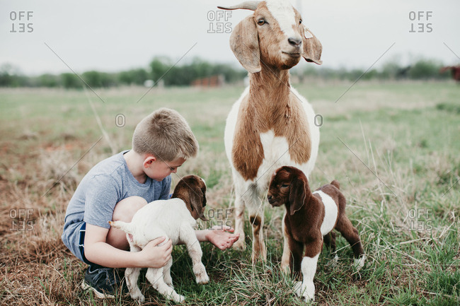 Boy petting a baby goat