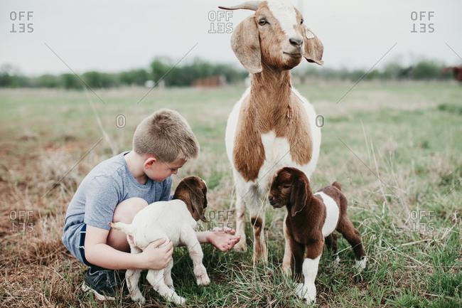 Boy petting a baby goat