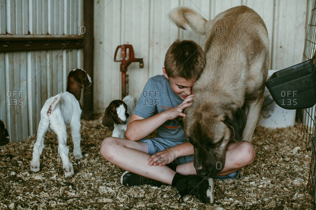 A boy petting dog by baby goats