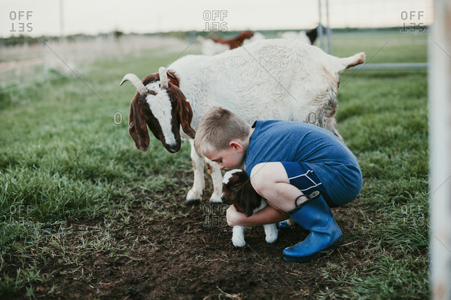 A boy picking up a baby goat