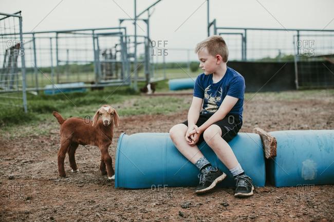 A boy sitting in a goat pen