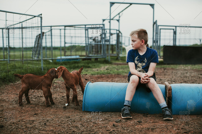 A boy sitting in a goat pen watching baby goats