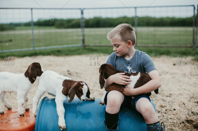 Young boy sitting in pen playing with baby goats