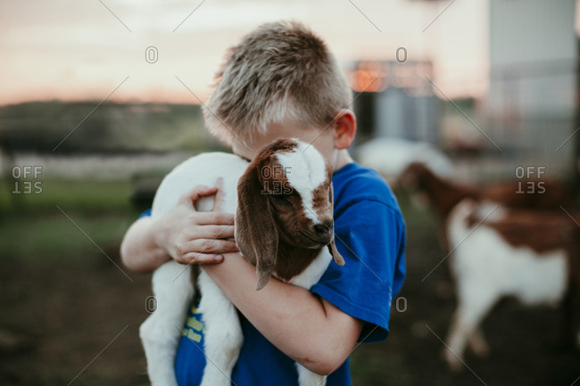 A boy holding a baby goat at sunset