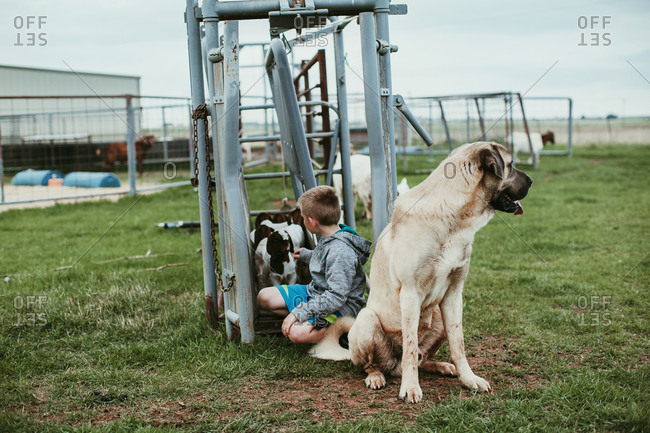 A boy sitting with dog on a farm petting a baby goat