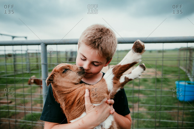 A boy kissing a young goat