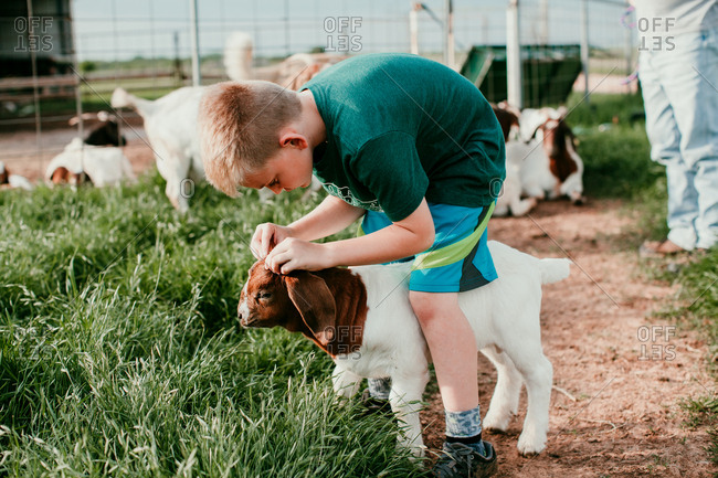 Young boy petting a baby goat