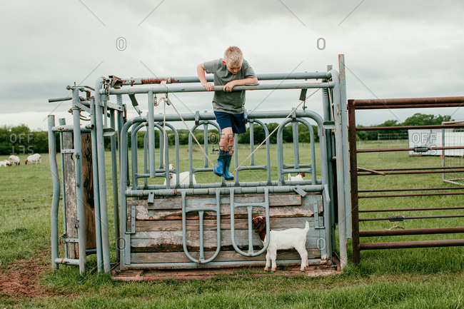 A boy playing on a cattle chute