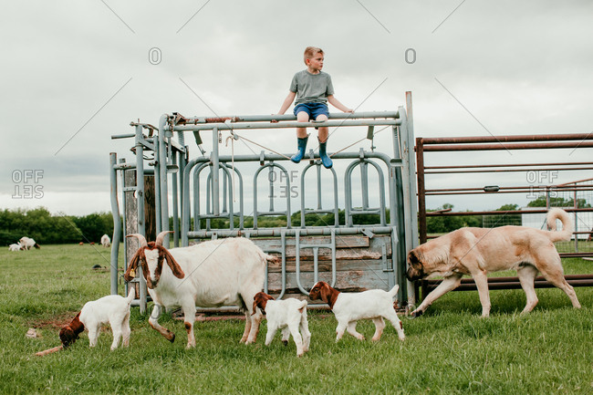 Young boy playing on a cattle chute