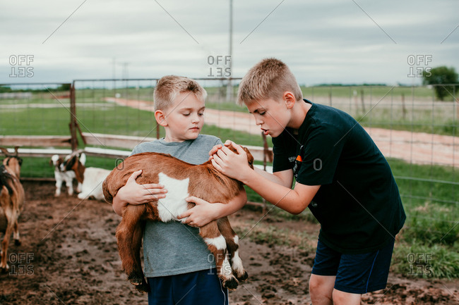 Boys petting a baby goat