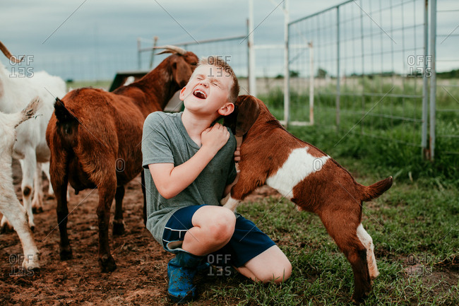 Boy playing with baby goats
