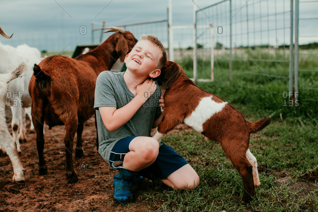 Young boy playing with baby goats