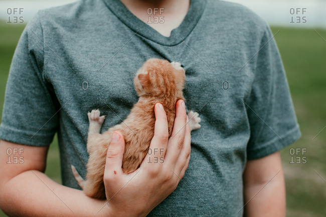 Close up of a young boy holding a baby kitten