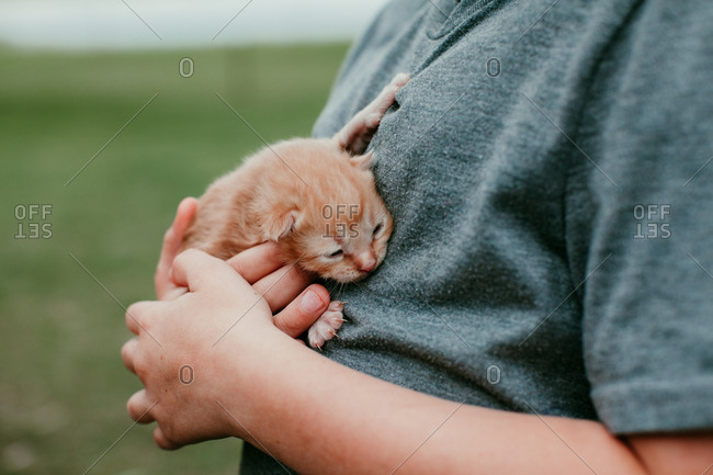 Close up of a child holding a baby kitten