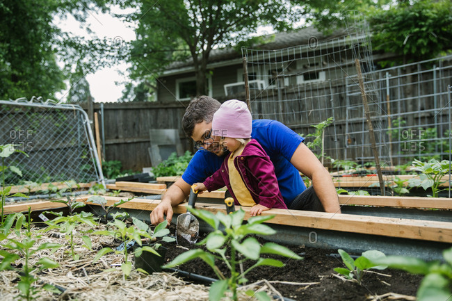 A father and his toddler daughter dig with shovels in a raised garden bed together