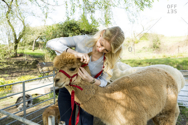 Woman with her alpacas