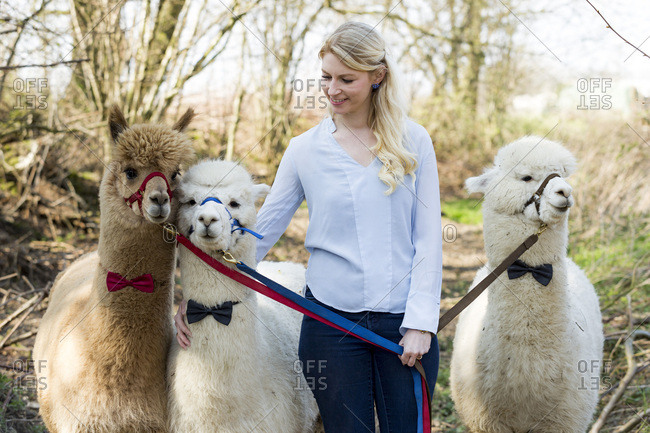 Smiling woman with three alpacas wearing bridles and bow ties