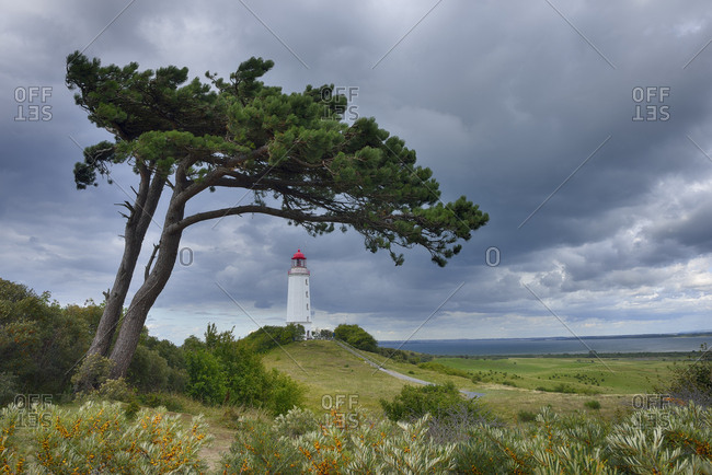Germany- Mecklenburg-Western Pomerania- Hiddensee Island- Dornbusch Lighthouse and pine tree with cloudy sky
