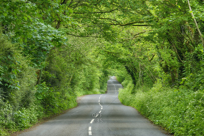 United Kingdom- England- Cornwall- rural road through green tunnel in forest
