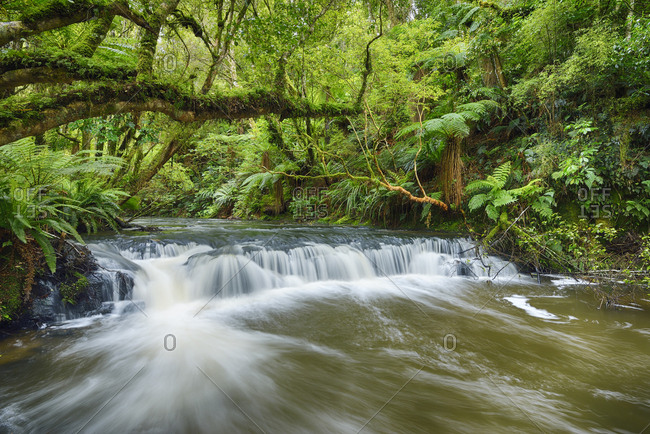 New Zealand- South Island- Catlins- Purakaunui Falls