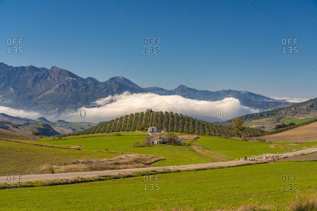 Spain- Andalusia- Province Malaga- Green landscape near Ronda with farm houses- sheep