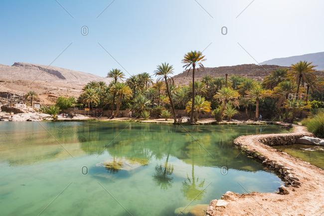 Arabia- Sultanate Of Oman- Palms in Wadi Bani Khalid