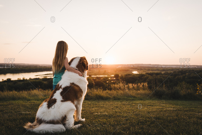 little girl watches sunset with saint bernard dog