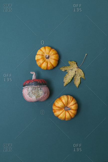 Decorative pumpkins in various colors and leaf on blue background