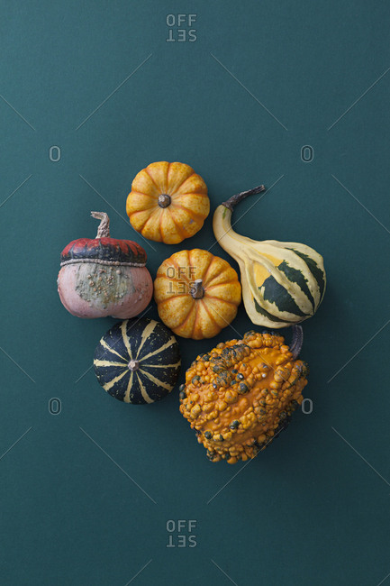 Pumpkins in various colors on blue background