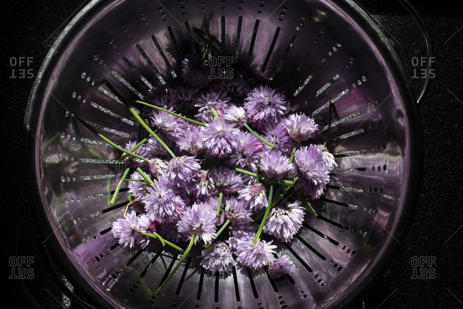 Chive blossoms in a colander