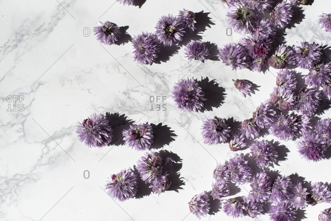 Chive blossoms scattered on a marble surface
