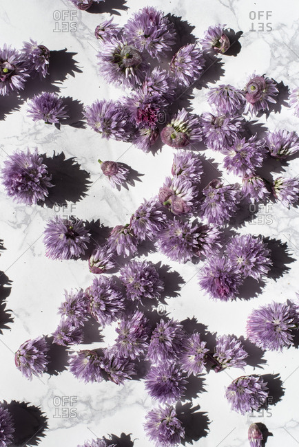 Chive blossoms scattered on a marble table