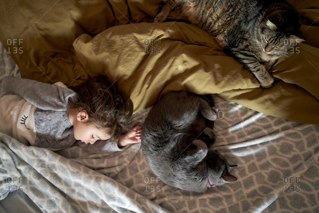 Toddler girl and two cats sleeping on bed- top view