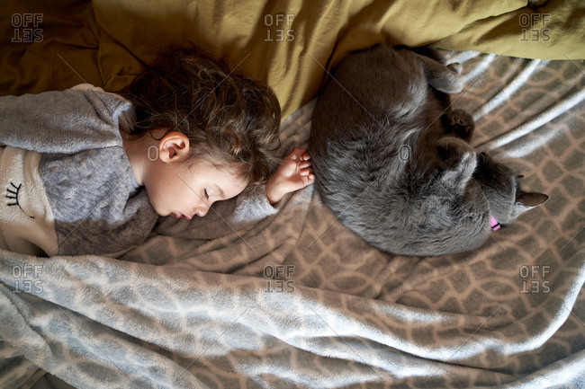 Toddler girl and gray cat sleeping on bed- top view